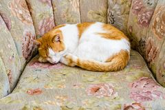 Ginger Cat Sleeping on Sofa Chair in Front of a House royalty free stock photography