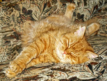 Ginger cat on sofa. Stock Photo