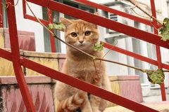 Ginger cat. On the stairs Royalty Free Stock Images