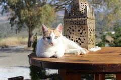 Ginger cat in the sun. Ginger cat laying on a table in the sun royalty free stock photography