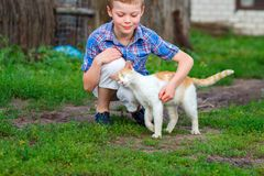 Ginger cat tenderly rubs against the foot of a little boy.  Stock Photo