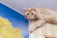 Ginger Cat on the Door at Home royalty free stock photography