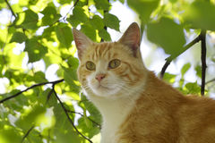 Ginger cat on a tree branch Stock Photo