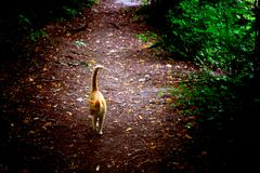 Ginger cat on the walk. To forest Royalty Free Stock Photography