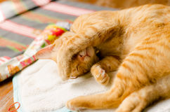 Ginger cat want to sleep Stock Images