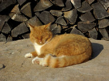The ginger cat warming itself in the sun. Phota made in Germany stock images