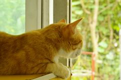 Ginger cat watching outside from glass window in home. Ginger cat watching outside from the glass window in home Stock Photo