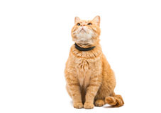 Ginger cat. On a white background Royalty Free Stock Photos