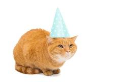 Ginger cat. On white background Stock Image