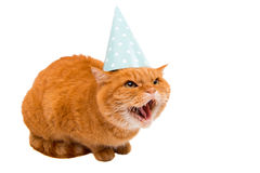 Ginger cat. On white background Royalty Free Stock Photos