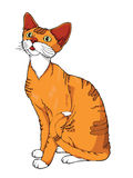 Ginger cat on a white background. Royalty Free Stock Images