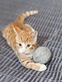 Ginger cat with yarn ball Royalty Free Stock Image