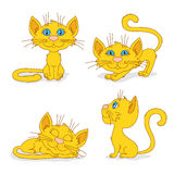 Ginger cats in different poses Stock Images