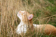 Ginger cats Royalty Free Stock Photos