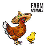 Ginger chicken with chick and sombreros. Vector sketch hand-drawn illustration  on a white background, poultry farm with chicken, chicken family Mother and Stock Images