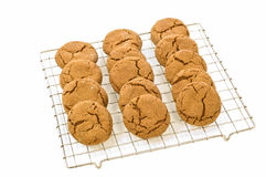 Ginger cookies. Fresh baked ginger cookies cooling on rack isolated on white background with room for copy Royalty Free Stock Images