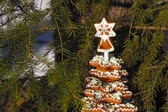 Ginger cookies in the shape of a christmas tree under the branch Royalty Free Stock Photography