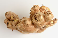 Ginger. Royalty Free Stock Images