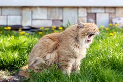 Ginger cute cat sitting on the garden Royalty Free Stock Photo