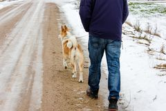 Ginger dog is looking down and waiting for her master. In snow and ice day in village in Latvia. Walking outdoor. Pet road walk in a winter 2019. Breeded stock photo