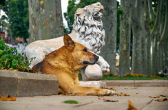 A ginger dog rests near the statue of a lion in Gulhane park. Is Stock Photo