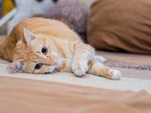 Ginger Fat Cat auf Bett Lizenzfreie Stockfotografie