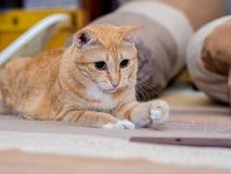 Ginger Fat Cat auf Bett Stockfoto