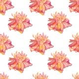 Ginger flower seamless pattern Royalty Free Stock Image