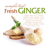 Ginger Royalty Free Stock Photos