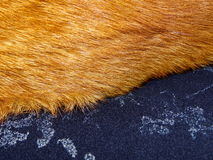 Ginger fur on a blue cashmere Royalty Free Stock Image