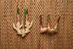 Ginger and Galangal roots on brown wallpaper showing texture of weave dried water hyacinth placemat. stock image