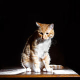 Ginger ginger tabby cat on a table Stock Photo