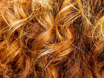 Ginger Hair Images stock