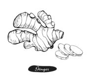 Ginger hand drawn vector illustration.Detailed retro style sketch.Kitchen herbal spice and food ingredient.Root, ginger. Pieces .Isolated spice object stock illustration