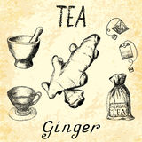Ginger herbal tea. Set of  elements on the basis hand pencil drawings. Royalty Free Stock Images