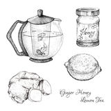 Ginger honey lemon tea ink sketches set Royalty Free Stock Photography
