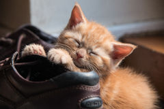 Ginger kitten Stock Photo