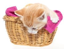 Ginger kitten in basket Stock Image