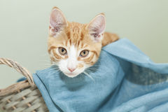Ginger kitten in a basket Stock Photos