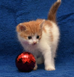 Ginger kitten and a Christmas ball Royalty Free Stock Images