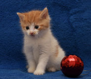 Ginger kitten and a Christmas ball Stock Images