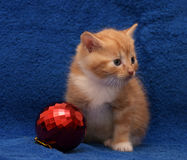 Ginger kitten and a Christmas ball Royalty Free Stock Image