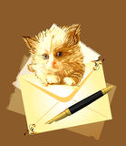 Ginger kitten with envelope. Stock Photos