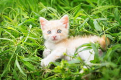 Ginger kitten in grass Royalty Free Stock Images