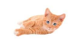 Ginger kitten laying on a white background Royalty Free Stock Photography