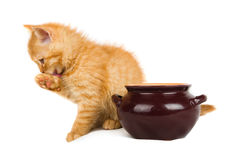 Ginger kitten licks muzzle next to a pot Stock Photography