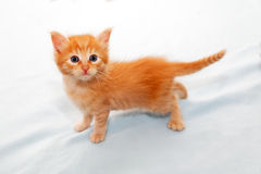 Ginger kitten look Stock Photos