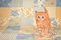 Ginger Kitten on Quilted Background Stock Images