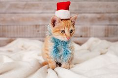 Ginger kitten readi for christmas - wearing a fluffy scarf and s royalty free stock photos
