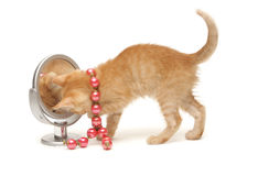 Ginger kitten with red beads looking into mirror Royalty Free Stock Photos